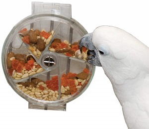 ​What are Best Bird Toys for Sale on Amazon