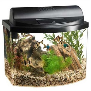 Best Amazing Desktop Aquarium For Your Office Desk